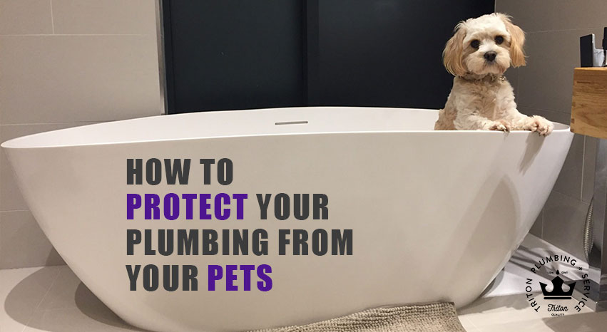 How To Protect Your Plumbing From Your Pets | Triton Plumbing Service London Ontario Plumber